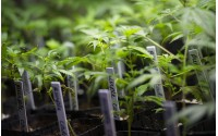 More Than Compliance:  Why Your Cannabis Business Needs Traceability Solutions