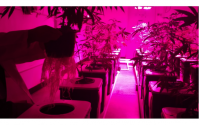 What to Know Before Expanding Your Cannabis Facility