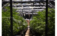 Keep it Clean: Smart Solutions for Clean & Organized Cannabis Cultivation