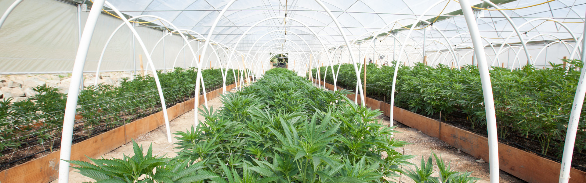 for cannabis cultivation